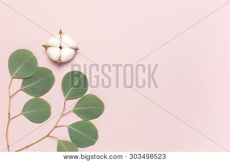 Cotton Flowers And Green Eucalyptus Twig On Pastel Pink Background. Flat Lay, Top View, Copy Space.