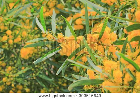 A Tree With Yellow Flowers Against The Nature
