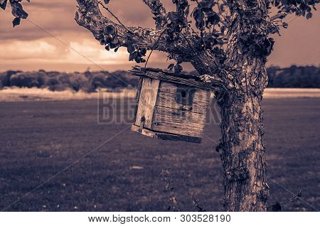 Ein Kleines Vogelhäuschen An Einem Baum Hängend Auf Einem Großem Feld Nahe Eines Angrenzenden Waldes