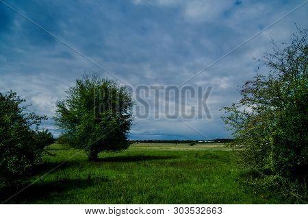 Ein Einsamer Baum Zwischen Büschen Unter Einem Stürmischen Regnerischen Himmel