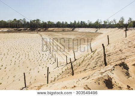 Afforestation Of The Former Sand Mine, Planted With Pine Seedlings