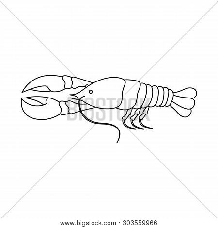 Isolated Object Of Crayfish  And Lobster Icon. Set Of Crayfish  And Boiled Vector Icon For Stock.