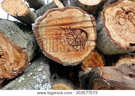 Logs. Log cuts. Stack of logs. Stack of firewood. Logs cuts prepared for fireplace. Woodpile. Wood for fireplace. Wood for winter. Firewood background. poster