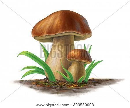 Two porcini mushrooms, boleuts edulis. Digital painting.
