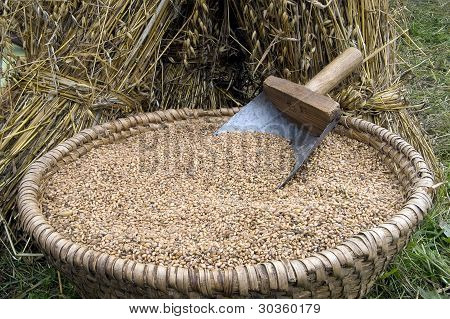 Rye Grain In A Basket