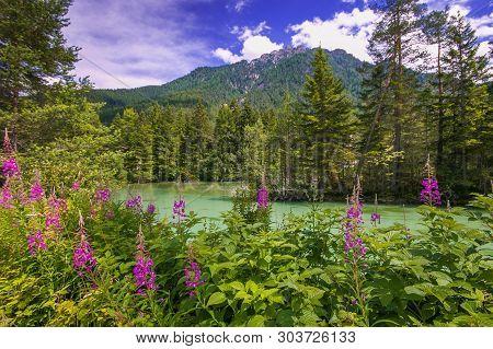 Wild Flowers On Toblacher See Of Lago Di Dobbiaco In Alto Adige, Italy