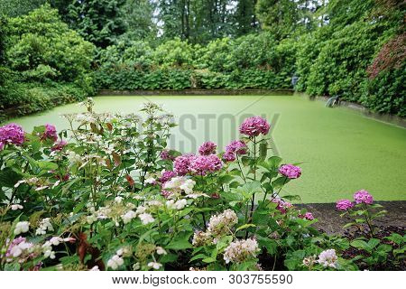 Lovely Formal Garden With Pink Hydrangeas And Pond Feature That Seems To Be Experiencing An Algae Bl