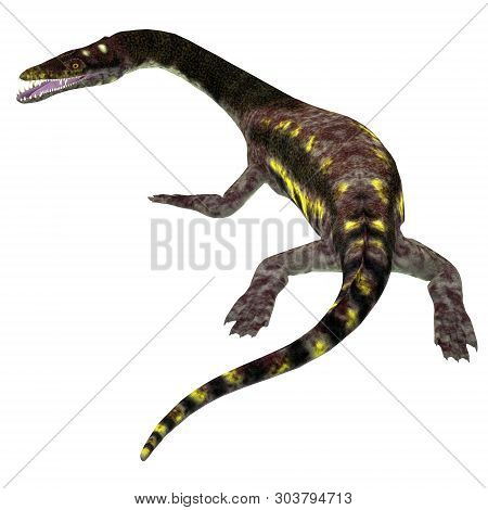 Nothosaurus Reptile Tail 3d Illustration - Nothosaurus Was A Carnivorous Aquatic Reptile That Lived