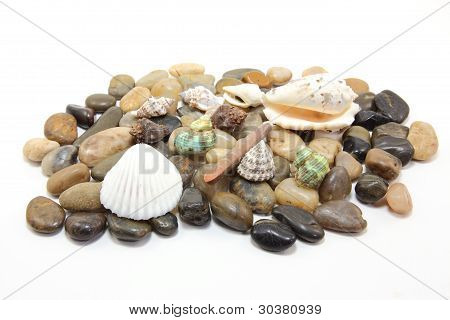 Shells on the cobble-stone