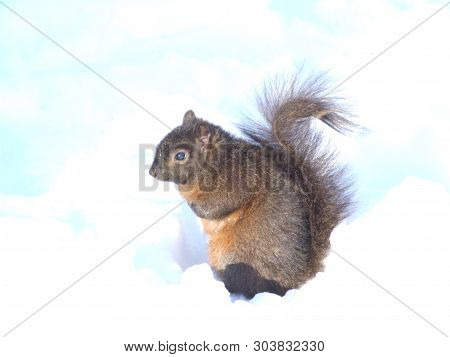 Squirrel In The Snow On A Winter Dat