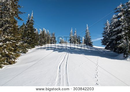 Winter Scenery With Few Trees, Snow And Blue Sky Bellow Krizva Hill In Lucanska Mala Fatra Mountains