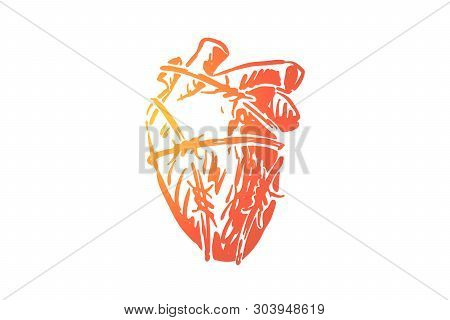 Human Heart In Barbed Wire, Blood Pumping Organ Wrapped By Cable With Sharp Thorns. Cardiological Di