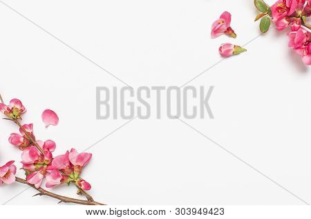 Pink Spring Flowers On Light Gray Background Top View Copy Space. Pink Flowering Branches. Summer Bo