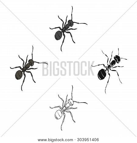 The Hymenopteran Insect Is An Ant.arthropod Animal Ant Single Icon In Cartoon, Black Style Vector Sy