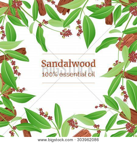 Sandalwood Sticks And Leaves Card Template With Copy Space. Card Template. Branch Boxing