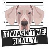 Illustration Mugshot Weimaraner - The guilty dog ??gets a police photo. Dog lovers and dog fans love them sassy dog. poster