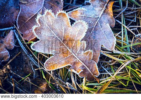 Bright dry autumn leaf in hoarfrost