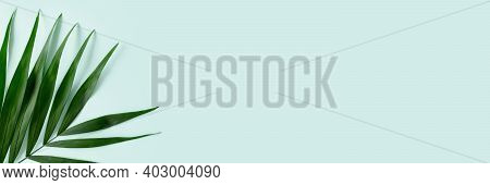Header With Green Palm Leaf On A Mint Background. Trendy Jungle Concept With Place For Text.