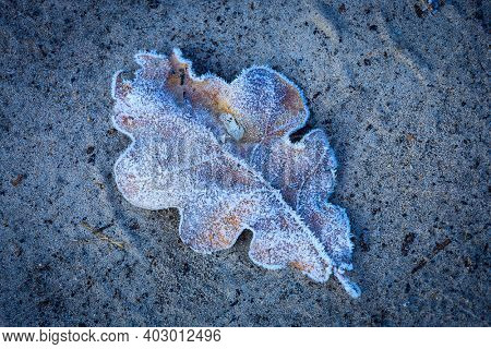 Alone oak leaf in hoarfrost on sand surface