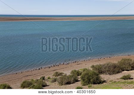 Group Of Magellanic Penguins At A Beach (horizontal)