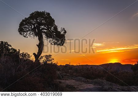 Juniper Tree At The Black Canyon Of The Gunnison National Park Is An American National Park Located