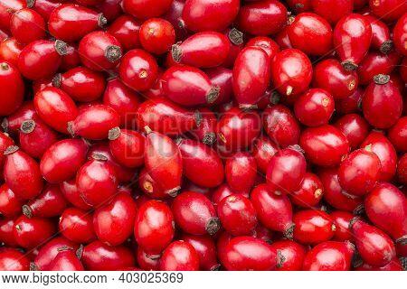 Big Fresh Healthy Raw Rose Hips, Background,