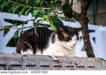 Cat In Istanbul, Turkey. Homeless Cute Cat. A Street Cat In Istanbul. Homeless Animals Theme. Homele