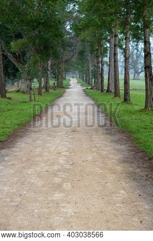 Long Light Coloured Pathway Through English Countryside. Symmetrical Pathway Lined With Tall Large T