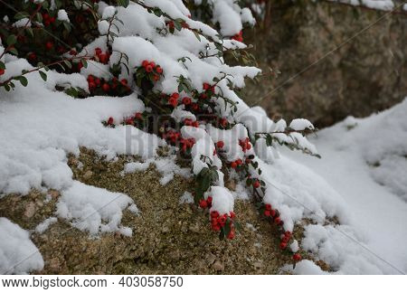 Snow-covered Bushes Can Be Recognized Only With Difficulty. However, The Textures Of The Individual
