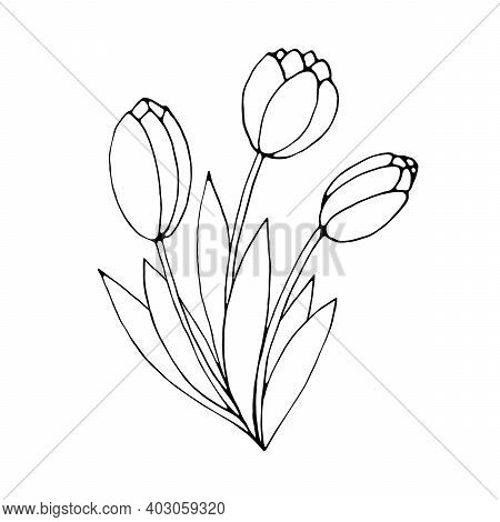 Bouquet Of Three Contour Flowers Of Tulips. Vector Hand Drawn Design Element. Simple Black Outline D