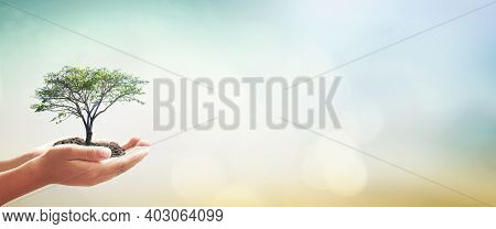 World Environment Day Concept: Human Hands Holding Big Tree Over Blurred Green Forest Background