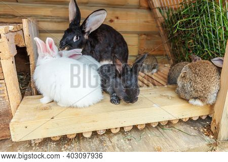 Many Different Small Feeding Rabbits On Animal Farm In Rabbit-hutch, Barn Ranch Background. Bunny In