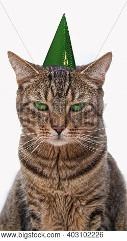 Bored Tabby Cat With A Party Hat On His Head Sitting In Front Of A White Background. Lets Go Party.a