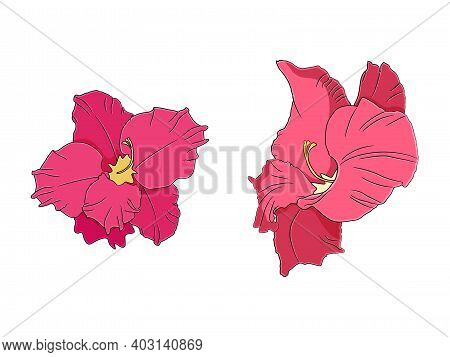 Gladiolus Flower In Hand Drawn Style. Vector Illustration.