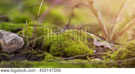 Moss Background. Green Moss On The Floor In Sunlight. Close-up, Macro, Selective Focus