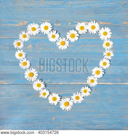Beautiful Chamomile Flowers In The Shape Of A Heart On A Blue Wooden Background. View From Above.