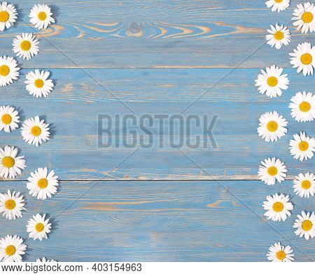 Chamomiles On A Blue Wooden Background. Template With For Place Text