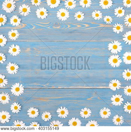 Frame Of Chamomile Flowers On A Blue Wooden Background. Backdrop With Copy Space. Chamomiles On A Bl