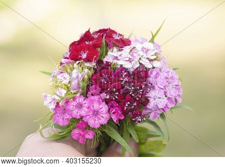 Beautiful Bouquet Of Phlox Flowers In Hand Close Up