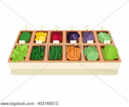 Market Wooden Shelf Organic Vegetable Foodstuff, Concept Eco Green Garden Food Meal, Flat Vector Ill