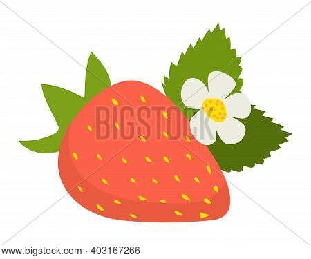 Concept Strawberry Icon With Green Leaf, Wild Flower Sweet Delicious Red Fruit Flat Vector Illustrat
