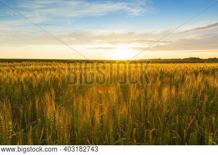 Golden Sunrise Over Wheat Field.the Huge Cloud Lit Yellow-orange Rays Of Sunrise.