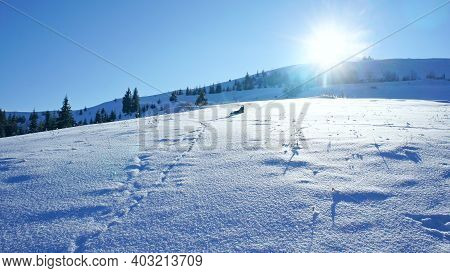 Snow-covered And Sun-drenched Meadow With Clear Snow With Rare Traces And A Dog Lying On The Snow. S