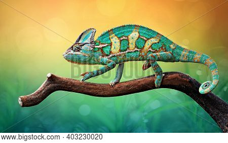 The Chameleon Perches On The Wood With Gradation Color Of Background, Reptile Walpaper, Animal Photo