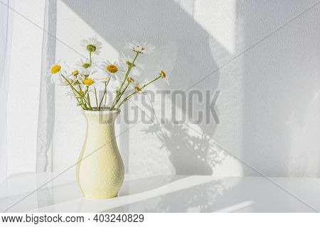 White Daisies Close-up In A Vase. Warm Sunlight, Soft Focus, Macro Yellow Stamens. The Concept Of Te