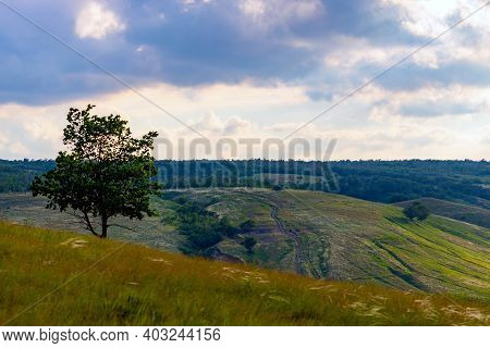 Green Meadow Landscape In Summer Or Springtime In Wild Nature