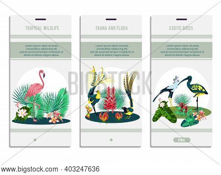 Tropical Wildlife Onboard Screens Set. Paradise Nature, Exotic Forest. Fauna, Flora And Exotic Birds