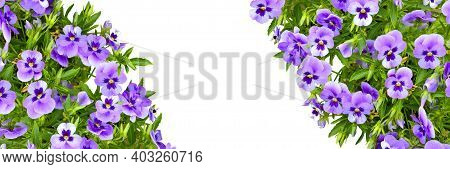 Floral Frame Or Border With Pansy Flowers And Green Leaves Isolated On White, Close Up And Copy Spac