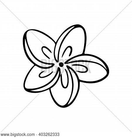 Plumeria Flower Outline. Frangipani Line Art Vector Illustration Isolated On White Background. Plume