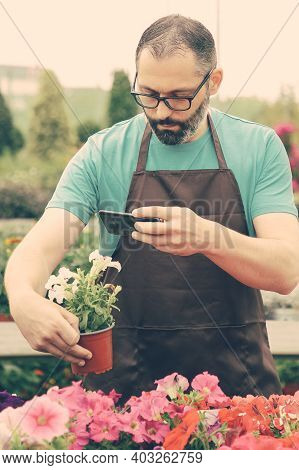 Concentrated Gardener Taking Photo Of Petunia In Pot. Focused Bearded Male Gardener In Apron Working